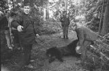 Police and Animal Control shoot a bear.